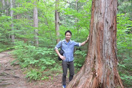 タニハタ組子の主材料 国産材 ヒノキ 檜