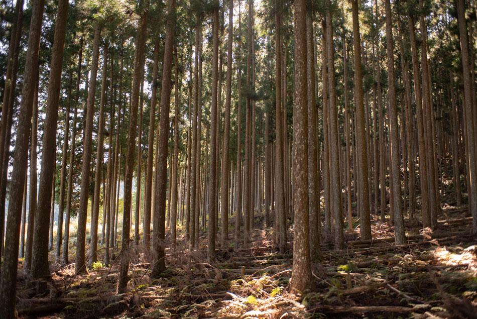 木材 吉野杉 組子材料 国土保全