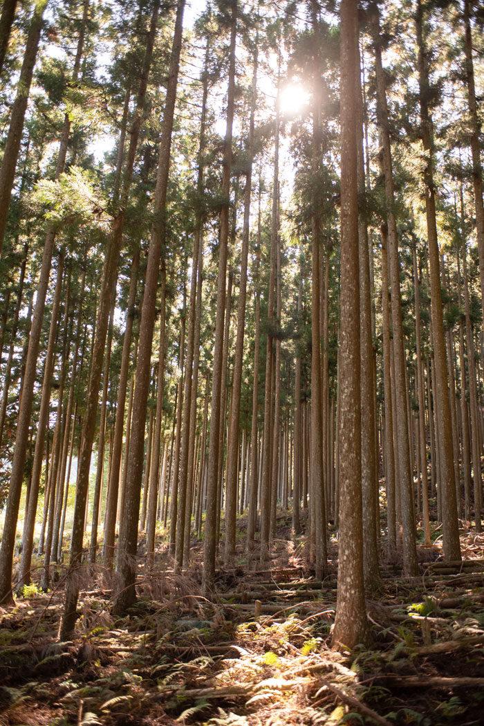 吉野杉 地球温暖化対策 気候変動問題