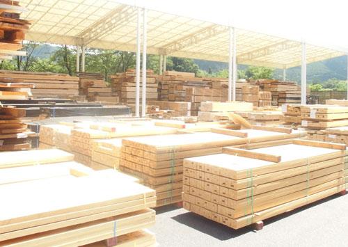 ヒノキ産地 木材の買い付け